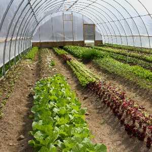 mezőgazdasági csapágyak
